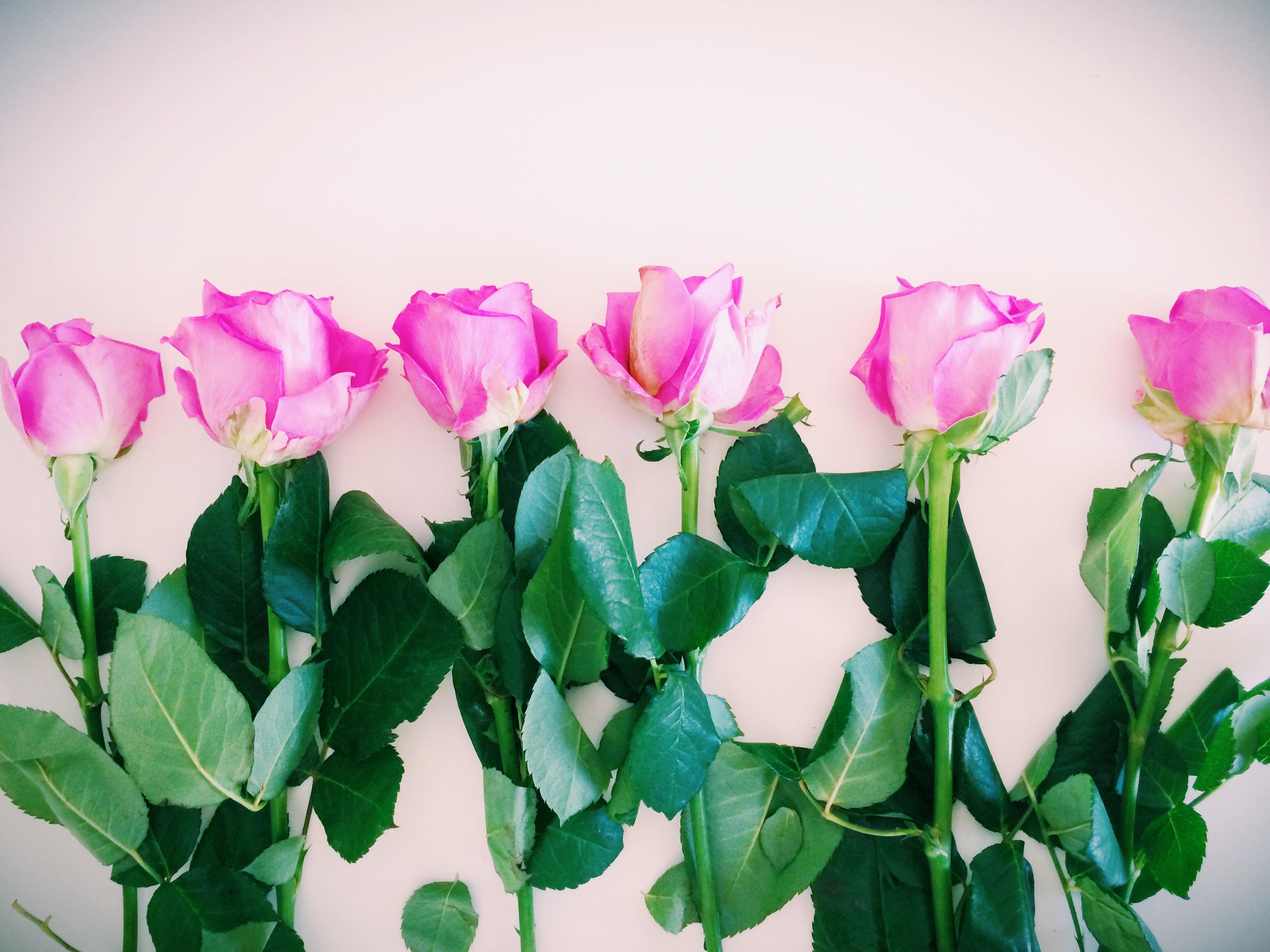 Wohlfühlfaktor: Frische Blumen