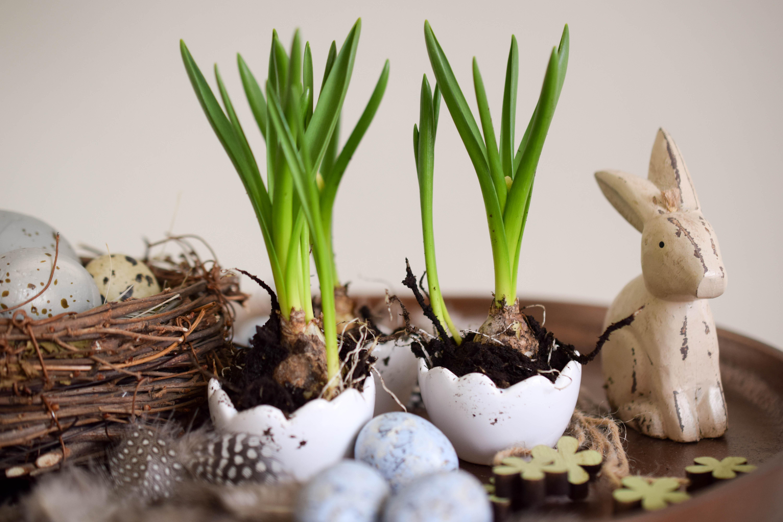 Ideen rund um Ostern