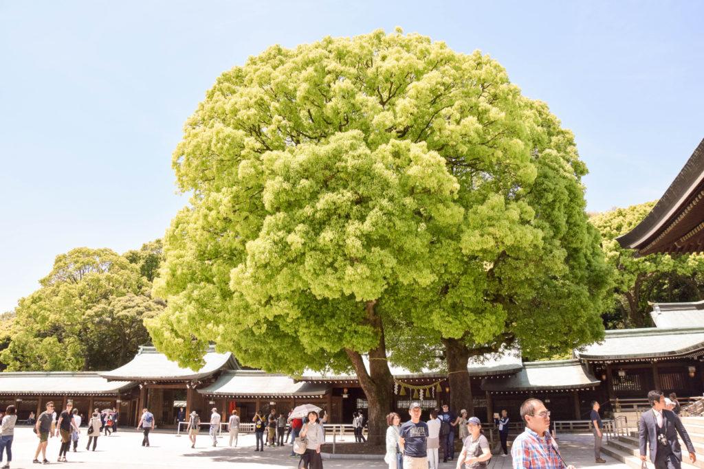 Japanreise Tokyo mintnmelon Babsi Sonnenschein 11